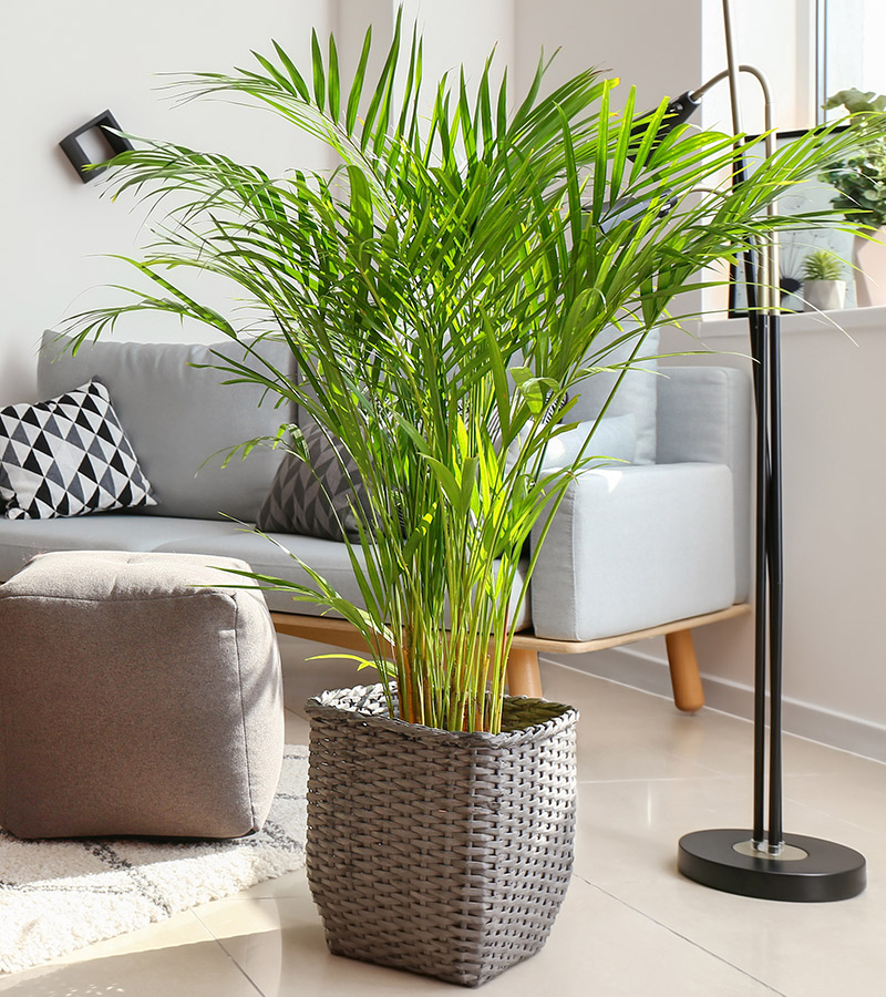 1-frontpage-houseplant