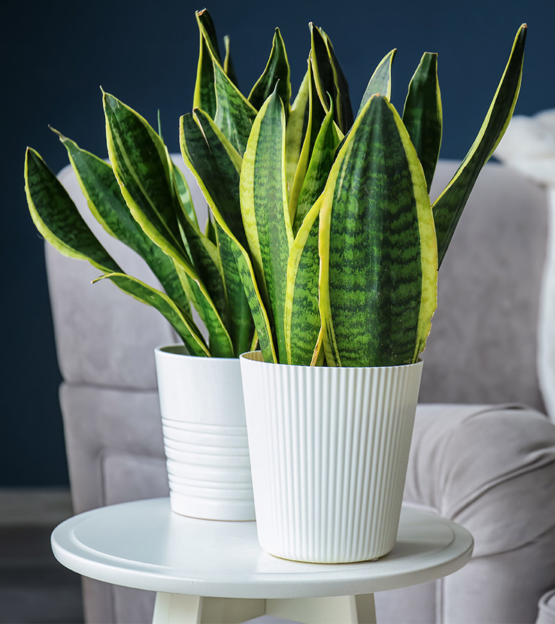 2-frontpage-houseplant