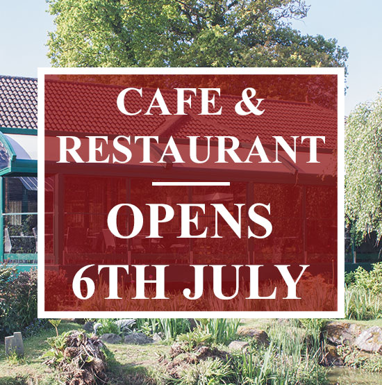 cafe-reopening