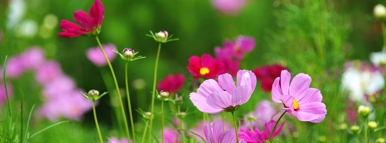 cutting-garden-inspiration-header