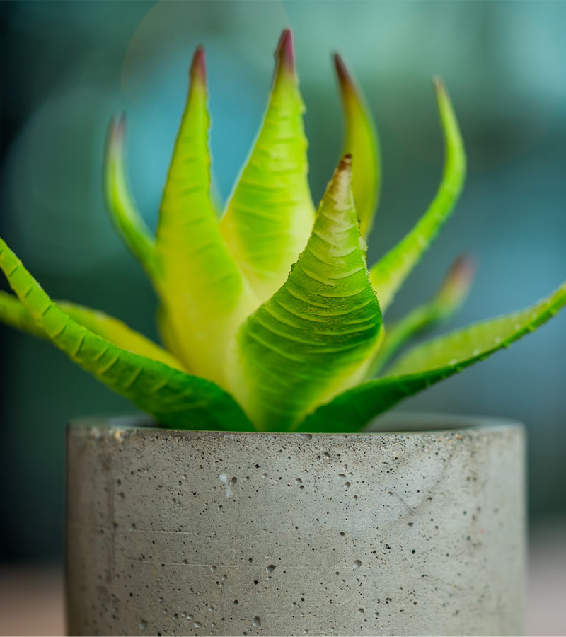 inspiration-1-cactus-front