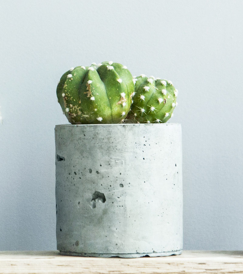 inspiration-2-cactus-front