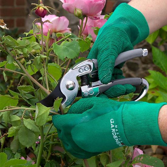 tandc-master-gardener-special