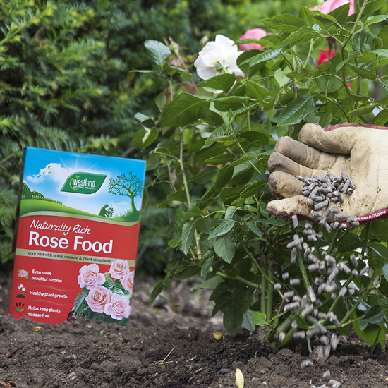 westland-rose-food-3kg