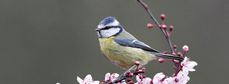 bird-care-heading-march