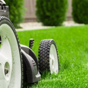 Lawn Product