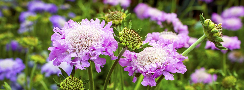 seasonal-planting-1365x505